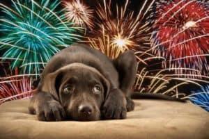 Vuurwerktips voor je bange hond