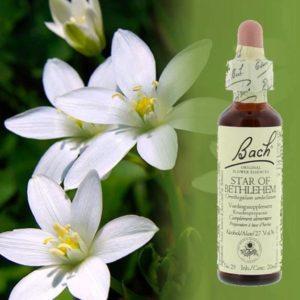 Bach Bloesem Remedies - Star