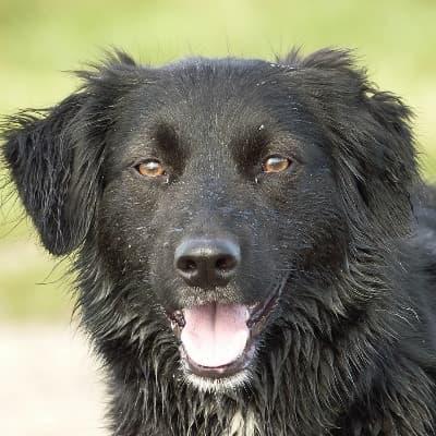 buitenlandse hond HappyDogz