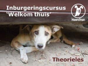 inburgeringscursus theorieles